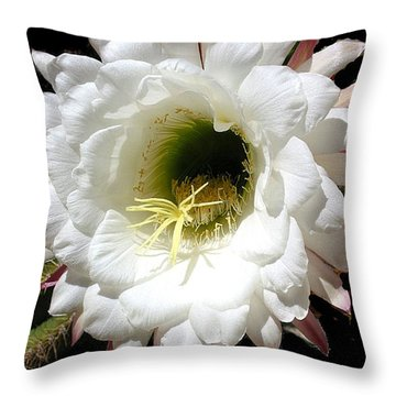 Throw Pillow featuring the photograph Arizona Cactus Flower No. 5 by Merton Allen