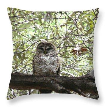 Arizona Spotted Owl Throw Pillow
