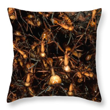 Army Ant Bivouac Site Throw Pillow