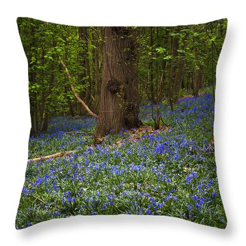 Around A Tree Throw Pillow by Svetlana Sewell
