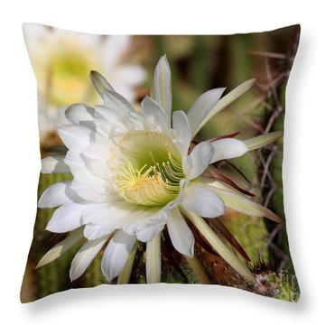Throw Pillow featuring the photograph Array Of Night Bloomers by Ruth Jolly