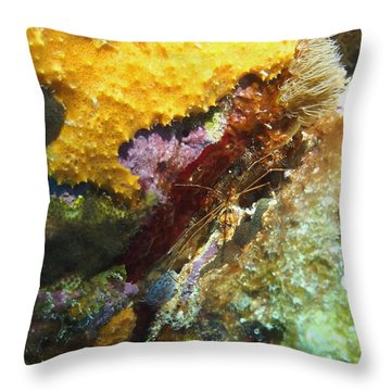 Throw Pillow featuring the photograph Arrow Crab In A Rainbow Of Coral by Amy McDaniel