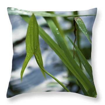 Throw Pillow featuring the photograph Arrowhead - Wildflower In Water by Jane Eleanor Nicholas