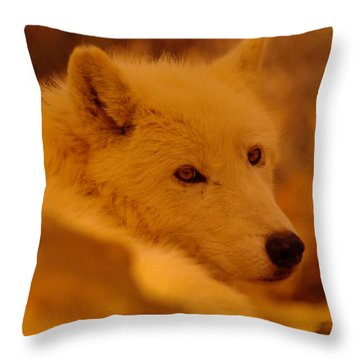 Artic Wolf  Throw Pillow by Jeff Swan