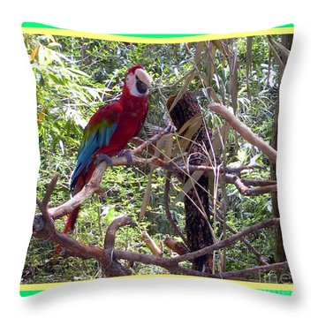 Throw Pillow featuring the photograph Artistic Wild Hawaiian Parrot by Joseph Baril