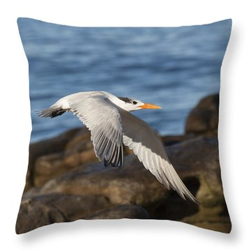 Throw Pillow featuring the photograph As The Tern Flies by Ruth Jolly