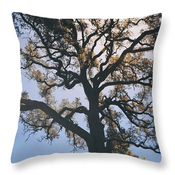 As We Grow And Change Throw Pillow by Laurie Search