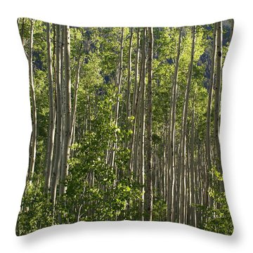 Aspen Along Independence Pass  Throw Pillow by Jacqueline Russell