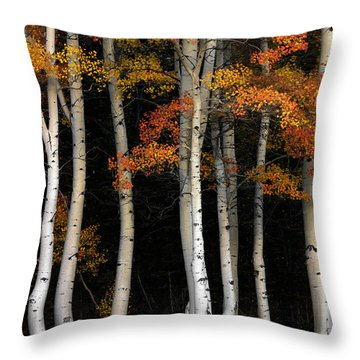 Aspen Contrast Throw Pillow