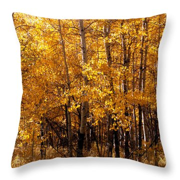 Throw Pillow featuring the photograph Aspen Grove Tahoe City by William Havle