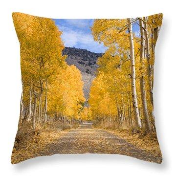 Aspen Lane Wide Crop Throw Pillow