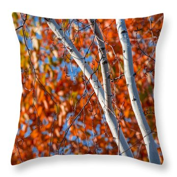 Throw Pillow featuring the photograph Aspen by Sebastian Musial