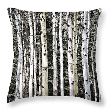 Aspen Tree Trunks Throw Pillow by Elena Elisseeva
