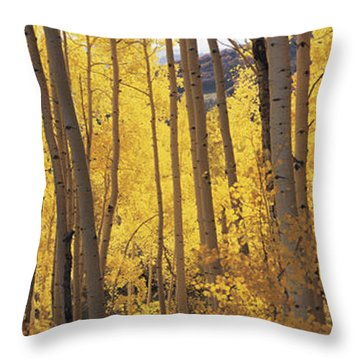 Aspen Trees In Autumn, Colorado, Usa Throw Pillow