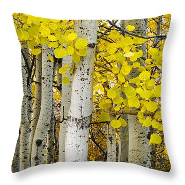 Aspens At Autumn Throw Pillow