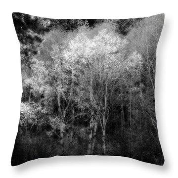 Aspens In Morning Light Bw Throw Pillow