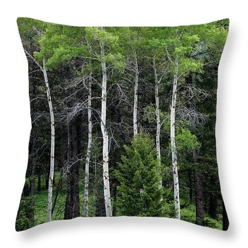 Aspens Of Yellowstone Throw Pillow by E B Schmidt