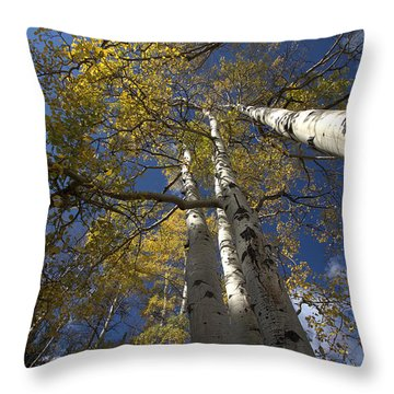 Aspirations Throw Pillow by Anne Rodkin