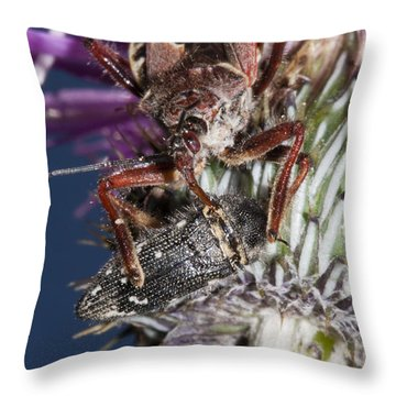 Assassin Bug Preying On Beetle Throw Pillow