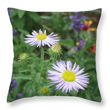 Asters In Close-up Throw Pillow