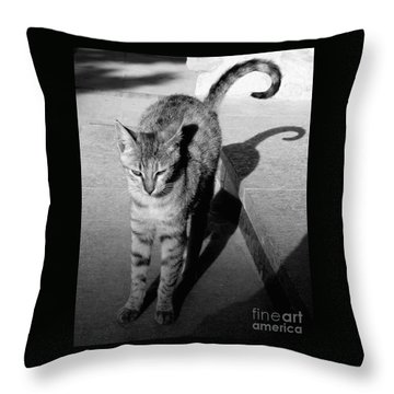 Aswan Cat Throw Pillow