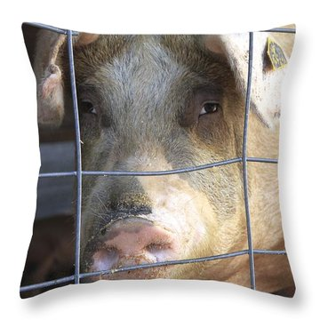 Throw Pillow featuring the photograph At The County Fair by Colleen Williams