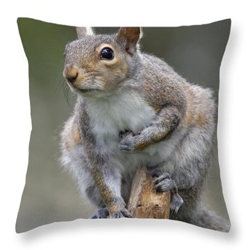 At The Summit Throw Pillow
