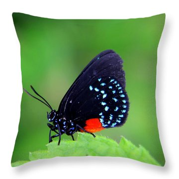 Atala Butterfly Throw Pillow