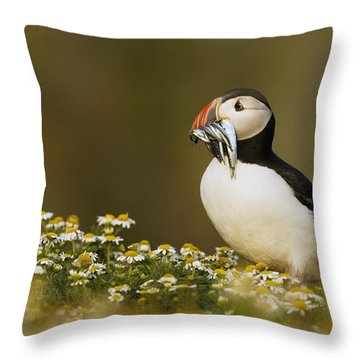 Atlantic Puffin Carrying Fish Skomer Throw Pillow by Sebastian Kennerknecht