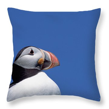 Atlantic Puffin In Breeding Colors Throw Pillow by Yva Momatiuk and John Eastcott