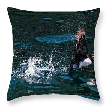 Atlantic Puffin Taking Off Throw Pillow