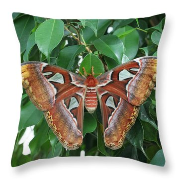 Throw Pillow featuring the photograph Atlas Moth #2 by Judy Whitton