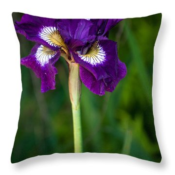 Throw Pillow featuring the photograph Attention by Penny Lisowski