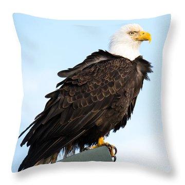 Attractive Bald Eagle Throw Pillow by Debra  Miller
