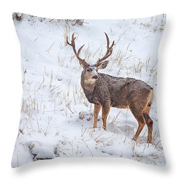 Atypical Buck Throw Pillow