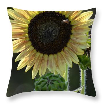 August Sunflower Throw Pillow