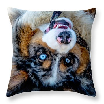 Australian Shepherd Throw Pillow by Cheryl Baxter
