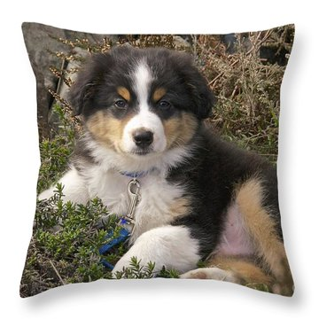 Australian Shepherd Puppy Throw Pillow
