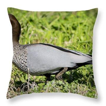 Australian Wood Duck Throw Pillow