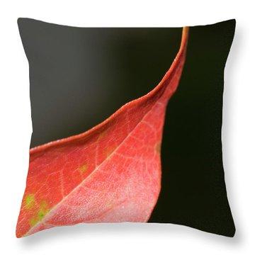 Throw Pillow featuring the photograph Autumn 2 by Tara Lynn