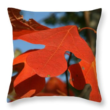 Autumn Attention Throw Pillow by Neal Eslinger