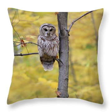 Autumn Barred Owl Throw Pillow