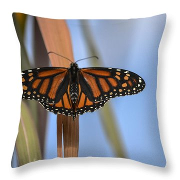 Autumn Beauty- Limited Edition 3 Of 10 Throw Pillow