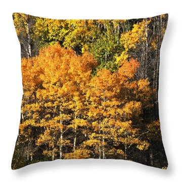 Autumn Color At The Continental Divide Throw Pillow by Kae Cheatham