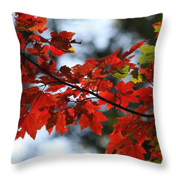 Throw Pillow featuring the photograph Autumn Contrasts by Vadim Levin