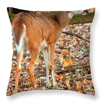Throw Pillow featuring the digital art Autumn Doe by Lorna Rogers Photography