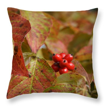 Throw Pillow featuring the photograph Autumn Dogwood Berries by MM Anderson