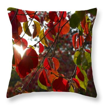 Autumn Dogwood In Evening Light Throw Pillow by Michele Myers