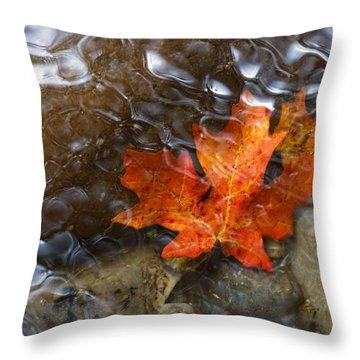 Autumn Down Under Throw Pillow