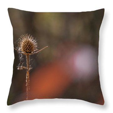 Throw Pillow featuring the photograph Autumn Dry Teasel by Jivko Nakev